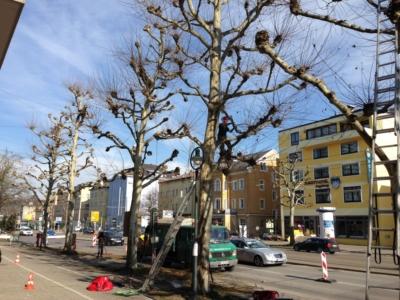 Auswahl Bäumen
